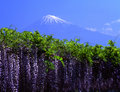 Fujisan 159 Royalty Free Stock Images