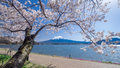 Fujisan Mountain with cherry blossom in spring, Kawaguchiko lake, Japan Royalty Free Stock Photo