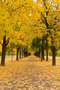 Full autumn colors in oslo norway Stock Images