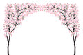 Full bloom pink sakura tree arch Cherry blossom curve black wood isolated on white Royalty Free Stock Photo