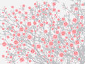 Full bloom pink sakura tree Cherry blossom light gray background