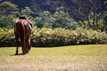 Full body horse in spring pasture thailand Royalty Free Stock Photo