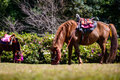 Full body horse in spring pasture thailand Royalty Free Stock Images