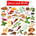 Full collection of aromatic Spices and Herbs used for cooking