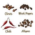 Full color realistic sketch illustration of allspice, cloves, black pepper and chili