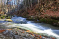 Full flowing river beautiful rapid with mossy stones through autumn forest Stock Photos