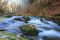 Full flowing stream beautiful rapid river with mossy stones through autumn forest Stock Photo