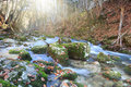Full flowing stream beautiful rapid river with mossy stones through autumn forest Royalty Free Stock Images