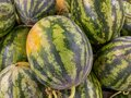 Full frame photo of stripped green watermelons for backgrounds concept