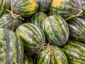 Full frame photo of stripped watermelons at fruit market