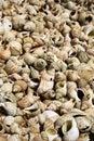 Full frame shot of shells Stock Image
