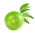 Full fresh lime and a branch with some green leaves placed on white background close up studio photography Stock Photo