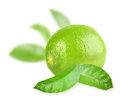 Full fresh lime and a some green leaves placed on white background close up studio photography Royalty Free Stock Image