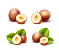 Full and Half Peeled Unpeeled Realistic Hazelnuts with Leaves Isolated