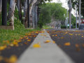 Full leaf fall