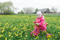 Full length portrait of little girl driving pink and yellow cycle across the spring blossoming dandelions meadow Royalty Free Stock Photo