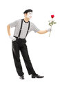 Full length portrait of a male mime artist giving a rose flower isolated on white background Royalty Free Stock Image