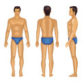 Full length views of a standing smile brunet naked man vector illustration front back side isolated on white created in adobe Royalty Free Stock Photography