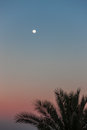 Full Moon in daylight sky and palm Royalty Free Stock Photo