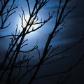 Full moon in foggy dark night, naked leafless trees silhouettes and clouds, halloween theme background, scary moonlight scenery