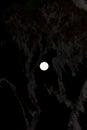 Full moon over ruwenzori mountains Royalty Free Stock Photo