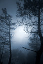 Full moon pinewood mysterious foggy Stock Photography