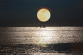 Full moon on sea to night Royalty Free Stock Photo