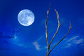 Full Moon And Tree Royalty Free Stock Photos