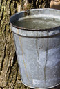 Full sap bucket Royalty Free Stock Images