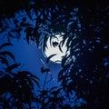 Full white moon behind tree in night