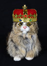 Fun and funny pet house cat with king crown we all know who the real ruler of the is we have a wearing a royal fit for a bow to Royalty Free Stock Image