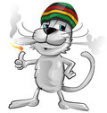 Fun jamaican cat Royalty Free Stock Photo