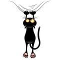 Fun Naughty Black Cat