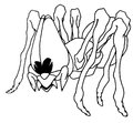 Fun spider outline drawing with big kind eyes Royalty Free Stock Photos