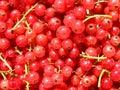 Fundo das passas de Corinto vermelhas Foto de Stock Royalty Free
