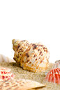 Fundo do Seashell Imagem de Stock Royalty Free