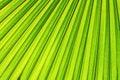 Fundo verde da folha Foto de Stock