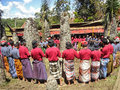 Funeral ceremony tanah toraja sulawesi the men of the tribe are dancing around megaliths during a they sacrify pigs and buffalos Stock Photo