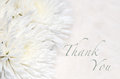 Funeral thank you card elegant with white chrysanthemums Royalty Free Stock Photography