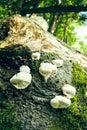 Fungal meeting a few tree mushrooms that grow on a stem Stock Photo