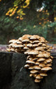 Fungi bouquet Royalty Free Stock Photography