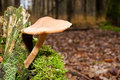 Fungi, mushrooms in a forest Royalty Free Stock Images