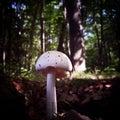 Fungi Royalty Free Stock Photo