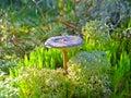 Fungus Royalty Free Stock Photo