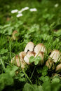 Fungus family Royalty Free Stock Photo