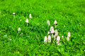 Fungus grow on a green glade Stock Photos