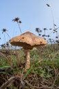 Fungus on mountain field Royalty Free Stock Photo