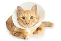 Funnel collar cat Stock Photos