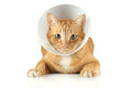 Funnel collar cat Royalty Free Stock Photos