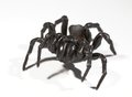 Funnel web spider a on white Royalty Free Stock Images
